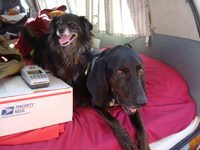 Photo of two doggies, Satchmo and Chispa, the real force behind Pocas Cosas